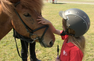 2. Berliner Islandpferdetreffen - die Islandpferde gehören zu den gutmütigsten Pferderassen