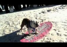 Der Hund – das sportliche Multitalent