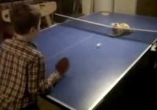 Ping Pong Katze