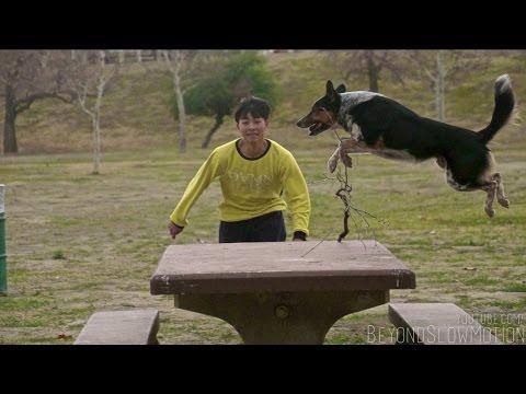 Parkour-Hund