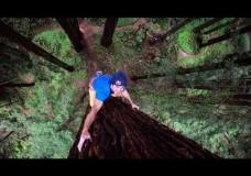 Klettern an Mammutbäumen